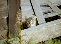 A feral cat in barn