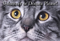 Volunteer or Donate to help feral cats