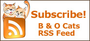 Subscribe to the Black & Orange Cats RSS feed
